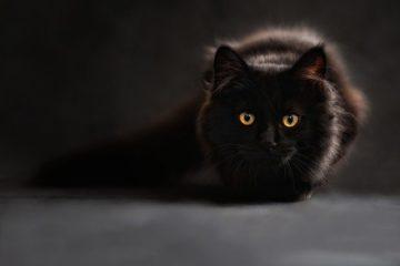 Je rêve de chats et de serpents... quelle est donc la signification de ces animaux ?